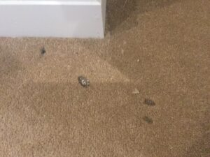 Carpet burns before