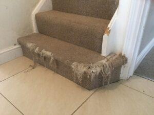 Stair carpet before